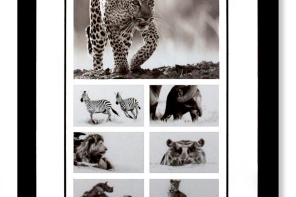 Framed Calendar Images - Wild Animals