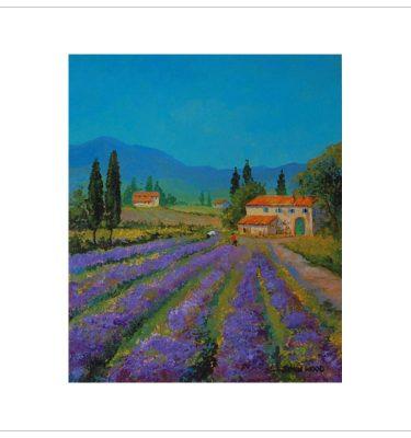 Lavender Field by John Wood