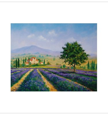 Lavender Farm by John Wood